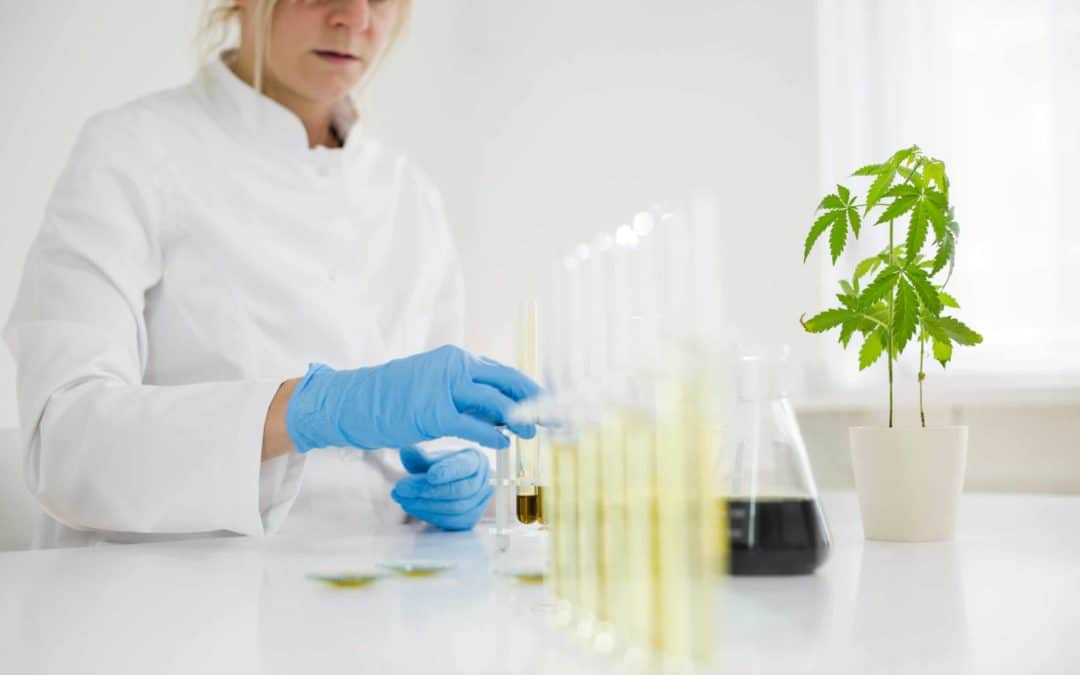 Third Party Certifications: How Safe is your CBD Product?