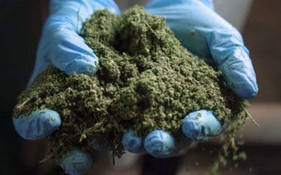 Why Hemp Bucking is Key for Efficient CBD Extraction